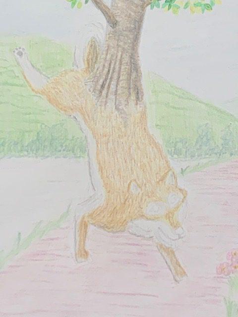 色鉛筆 花咲かじいさん 昔話 イラスト