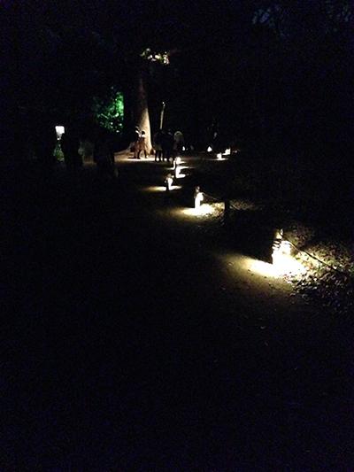 ライトアップされた歩道