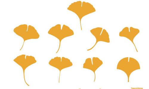 イチョウの葉のベクターデータ