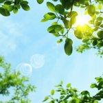 夏の暑さ対策