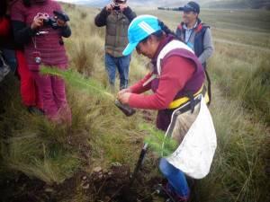Femme péruvienne qui plante un arbre
