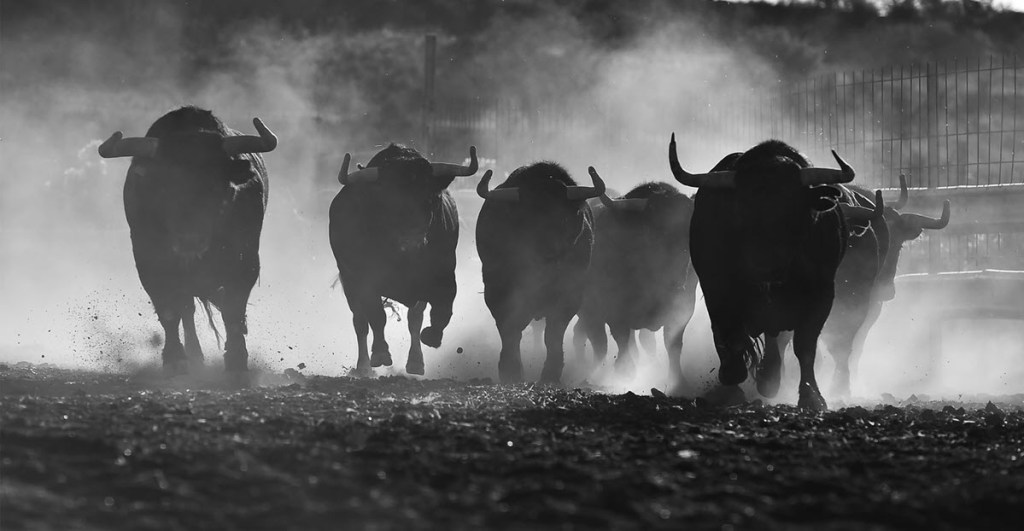 Stampede of Bulls signifying that New S&P 500 stock markets highs are bullish