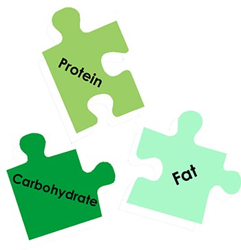 protein carb fat macronutrients