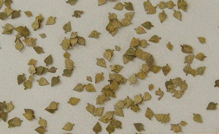 Birch - Autumn Laser Cut Leaves