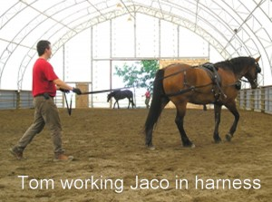 Jaco in Harness