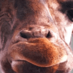 Giraffe Picture Products and Gifts