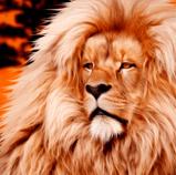 lionorange