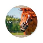 Just Horsing Around Horse Photograph