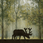 Moose Silhouette in Forest