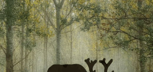 Moose Silhouette in Forest Gifts
