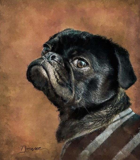 Black Pug Dog Portrait Painting Prints and Products