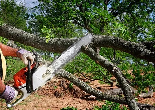 tree cutting portland me