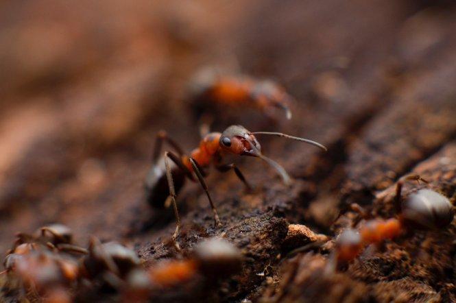 Image Titled Get Rid Of Carpenter Ants Step 7