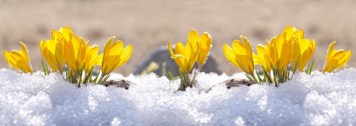 Winter Gardening in New Jersey: Know Your Hardiness Zone