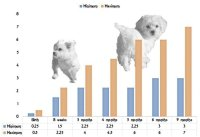 Maltese Puppy Growth Chart