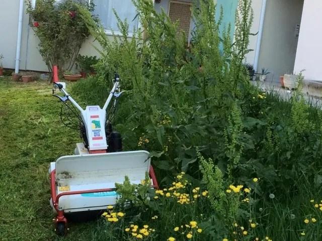 Potatura siepi e alberi  Trieste TS  GTS Giardinaggio