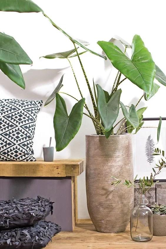 eXcLusiveplanten kamerplanten en buitenplanten huren en kopen