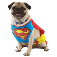 Howl-O-Ween {Pet Superhero Costumes} - Irresistible Pets
