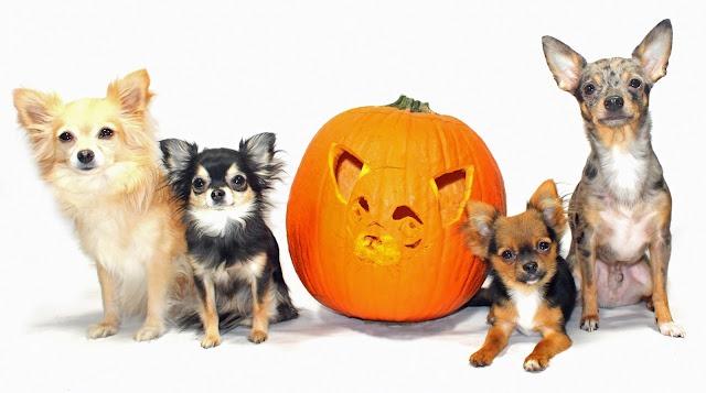 Better Homes Pumpkin Carving Ideas