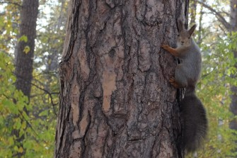 Auch das sibirische Eichhörnchen wartet schon.