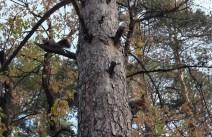 Da geht das sibirische Eichhörnchen wieder zu seinem sibirischen Eichhörnchenfreund zurück, der sich nicht zu uns getraut hat.