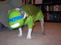 IRTI - funny picture #914 - tags: dog ninja turtle costume ...