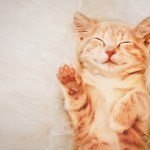 Calling All Pet Lovers: Become a Foster Care Volunteer