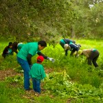 Volunteer Activities at Irvine Ranch Conservancy
