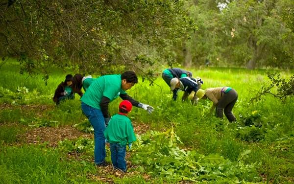 Volunteer Activities at Irvine Ranch Conservancy