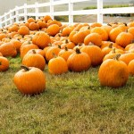 Pumpkin Patch and Farm Tours