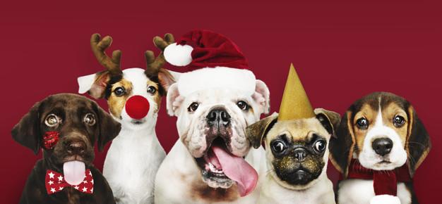 Do Good this Holiday Season:  Adopt a Pet Who Needs a Home