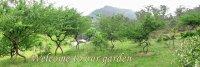 Tree Shapers | Irvingparkgardenclub's Blog