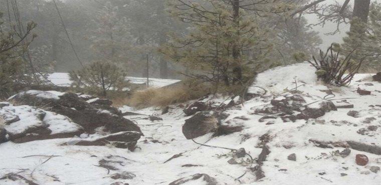 portada-nevada-michoacan