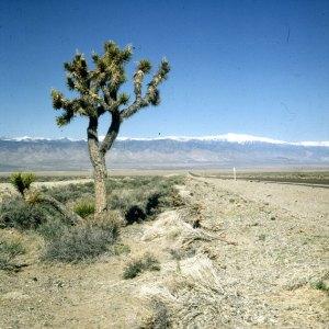 Joshua Tree zwischen Kalifornien und Nevada 1983
