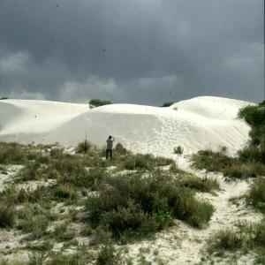 White Sands mit Gipsdünen 1983