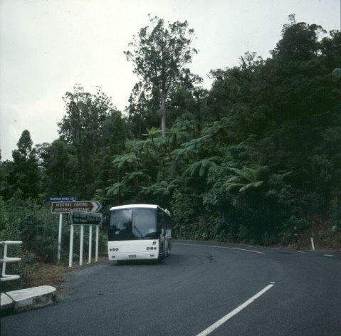bay-of-islands-kauri-bus