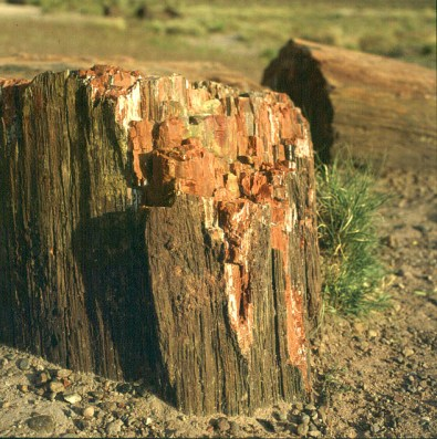 Petrified Forest 1983