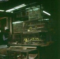 Hongkong-Kowloon Vogelmarkt 1997