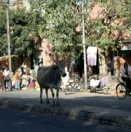 Indien-Jaipur-Markt 1999