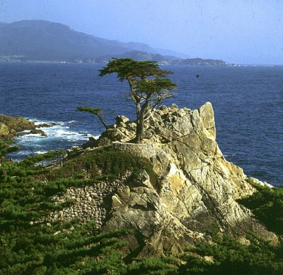los-angeles-monterey-lonepine