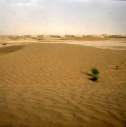 Marokko-Sandwueste 1995