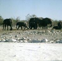 namibia-etoscha-elefanten-1987