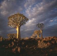 namibia-koecherbaumwald 1987