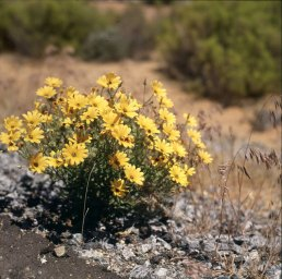 namibia-am Oranjefluss 1987