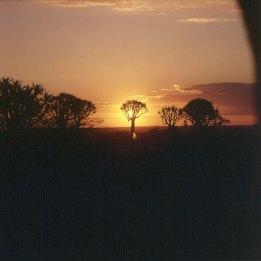 namibia-koecherbaum-sonnenuntergang 1987