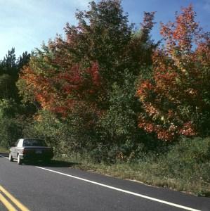 new-hampshire-Toyota -erstes Herbstlaub