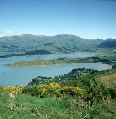 neuseeland-queenstown-ginsterufer 2001