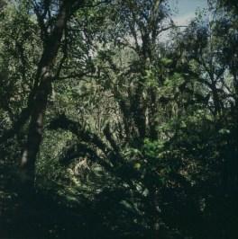 neuseeland-queenstown-regenwald 2001
