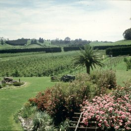 neuseeland rotorua-kiwiplantage 2001
