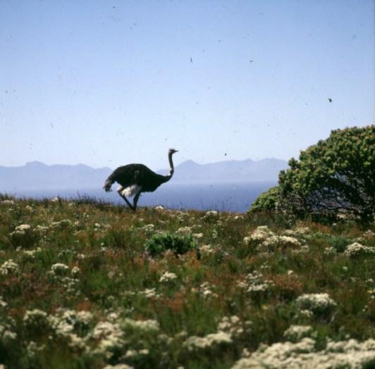 Südafrika im Kap N.P. 1987